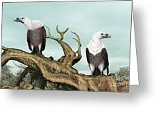 Griffon Vultures Greeting Card