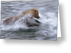 Grizzly Bear Chasing Fish Greeting Card