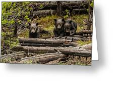 Grizzly Triplets After Rain Greeting Card