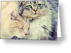 Gutter Kitties Seven Greeting Card