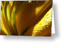 1 H Na Lily Greeting Card