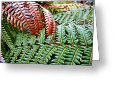 Hapu'u Frond Greeting Card