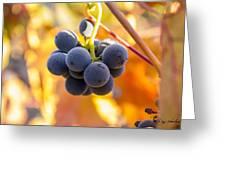 Harvest Gratitude Greeting Card