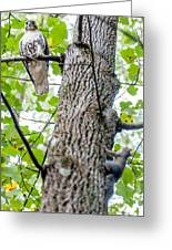 Hawk Hunting For A Squirrel On An Oak Tree Greeting Card
