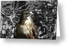 Hawk Of Prey Greeting Card