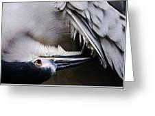 Heron Feathers Greeting Card