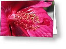 Hibiscus Named Luna Rose Greeting Card