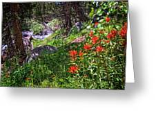 High Country Wildflowers 2 Greeting Card