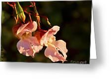 Himalayan Balsam Greeting Card