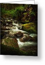 Hoh Stream Greeting Card by Stuart Deacon