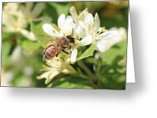 Honeybee And Honeysuckle Greeting Card