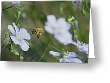 Honeybee At Work  Greeting Card