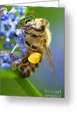 Honeybee On California Lilac Greeting Card