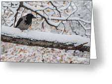 Hooded Crow First Snow Greeting Card