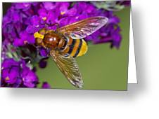 Hornet Mimic Hoverfly Greeting Card by Science Photo Library