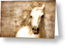 Horse Whisper Greeting Card