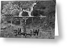 Hound Dog Weather Vane Greeting Card