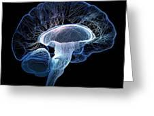 Human Brain Complexity Greeting Card