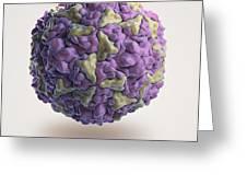 Human Rhinovirus Greeting Card