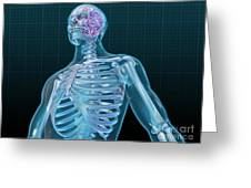 Human Skeleton And Brain, Artwork Greeting Card