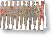 Human Systems In The Female Anatomy Greeting Card