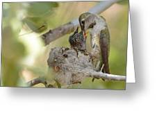 Hummingbird Babies Greeting Card
