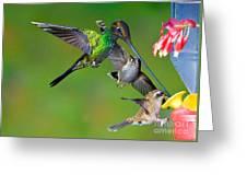 Hummingbirds At Feeder Greeting Card