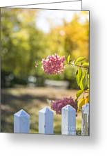 Hydrangeas In The Autumn Sun Greeting Card