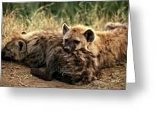 Hyene Tachetee Crocuta Crocuta Greeting Card