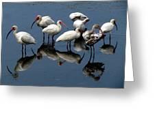 Ibis 10 Greeting Card