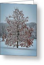 Iced Tree Greeting Card