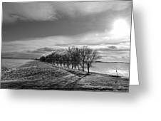 Icy Shelterbelt Greeting Card