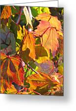 Illumining Autumn Greeting Card