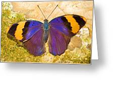 Indian Leaf Butterfly Greeting Card