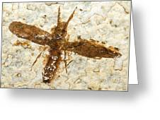 Insect Fossil Greeting Card