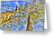 Into The Sky Greeting Card