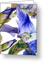 Iris II Greeting Card