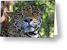 Jaguar 2 Greeting Card