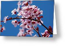 Japanese Cherry Tree Greeting Card