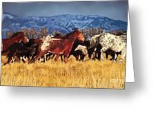 Joe's Horses Greeting Card