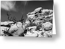 Joshua Tree 2 Greeting Card