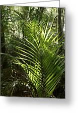 Jungle Ferns Greeting Card
