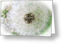 Just A Dandelion Greeting Card