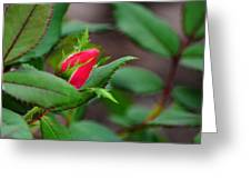 Just A Little Bud Greeting Card