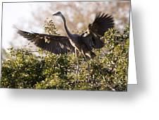 Juvenile Blue Heron Greeting Card