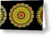 Kaleidoscope Ernst Haeckl Sea Life Series Triptych Greeting Card by Amy Cicconi