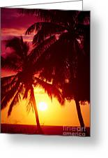 Kamaole Nights Greeting Card