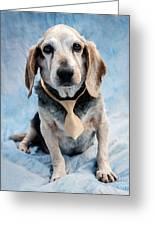Kippy Beagle Senior Greeting Card