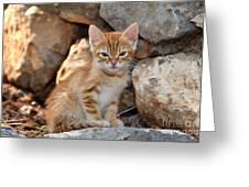 Kitten In Hydra Island Greeting Card