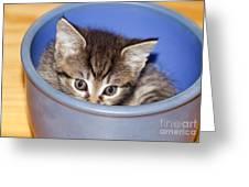 Kitten Greeting Card
